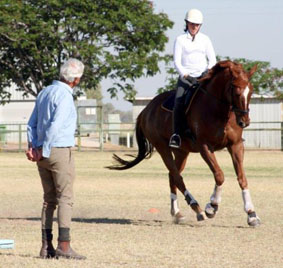 coaching horse photo